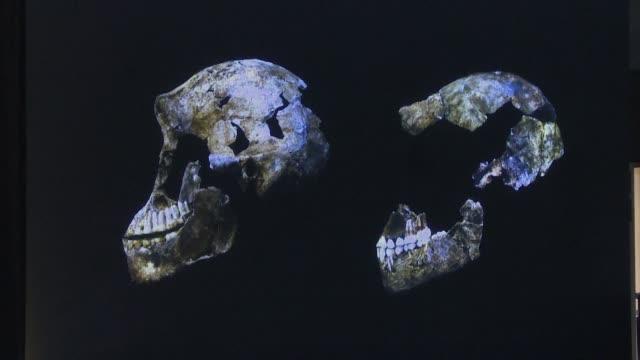 los hominidos primitivos podrían haber vivido en africa al mismo que tiempo que los humanos, segun informaron investigadores el martes al dar a... - moderno stock videos & royalty-free footage