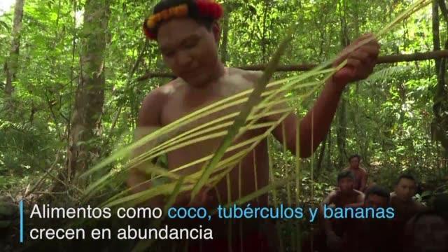los indigenas waiapi no dependen del comercio ni del dinero para vivir - tribu sudamericana video stock e b–roll