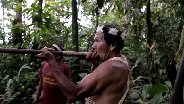los indigenas waorani de ecuador defienden con armas la selva amazonica de los invasores y con demandas tratan de mantener alejados a las petroleras... - ecuador stock videos & royalty-free footage