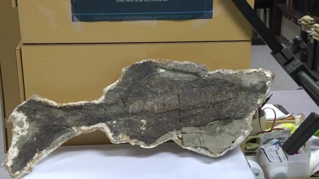 los paleontologos hablan con frecuencia de miles y millones de anos pero el estadounidense robert depalma dice ser capaz de poder describir los... - arqueologia stock videos & royalty-free footage