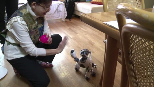 los perros robots pueden ser la mascota perfecta - domestic animals stock videos & royalty-free footage