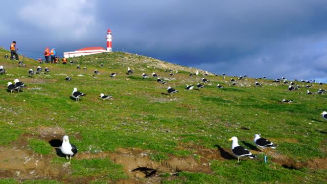 los pingüinos natural monument, punta arenas, magallanes region, chile, south america, america - bird watching stock videos & royalty-free footage