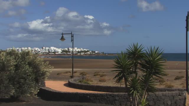 ws, los pocillos beach, lanzarote, province of las palmas, canary islands, spain - fan palm tree stock videos & royalty-free footage