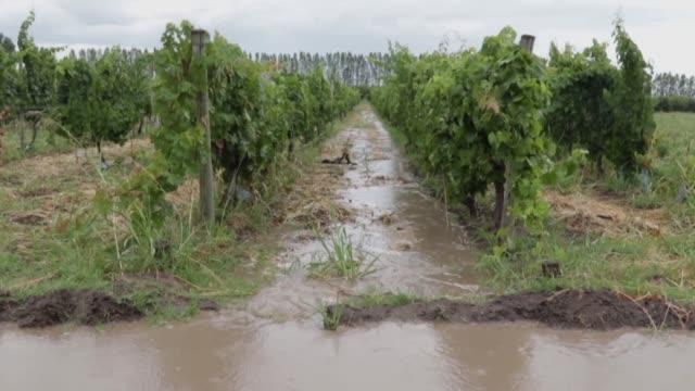 stockvideo's en b-roll-footage met los productores del valle de uco una rica zona vitivinicola en el oeste de argentina fueron un grupo clave para lograr la derogacion de una ley... - agricultura