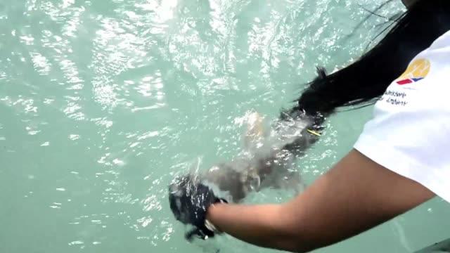 los tiburones estan siendo marcados con chips para identificar sus habitats dentro de la reserva marina del archipielago ecuatoriano de galapagos... - reserva natural stock videos and b-roll footage