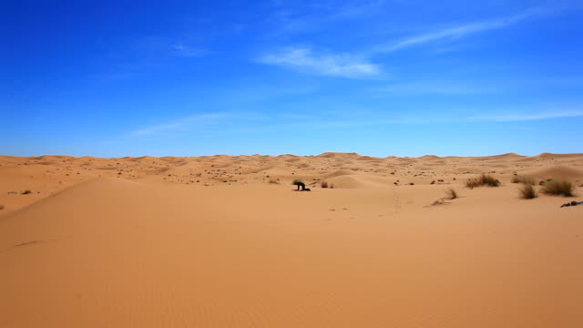 Lost Man Alone and Desperate in the Desert, HD Video
