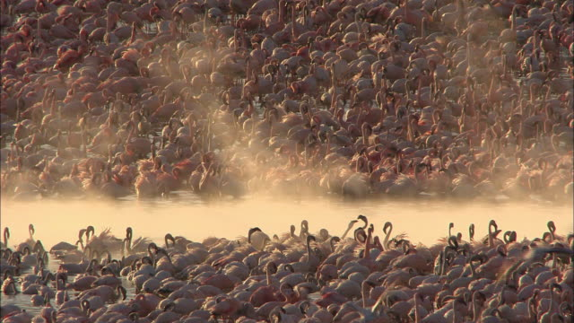 A lot of Flamingoes at a river (Africa)