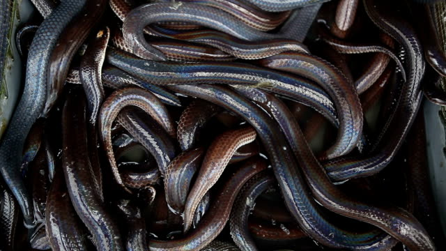 lot of snakes in a box - snake stock videos & royalty-free footage