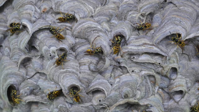 A lot of wasps at nest building with overview