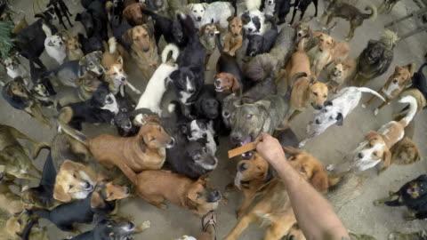 vídeos y material grabado en eventos de stock de lotes de perros comiendo juntos en la consecución de la paz - grupo grande de animales