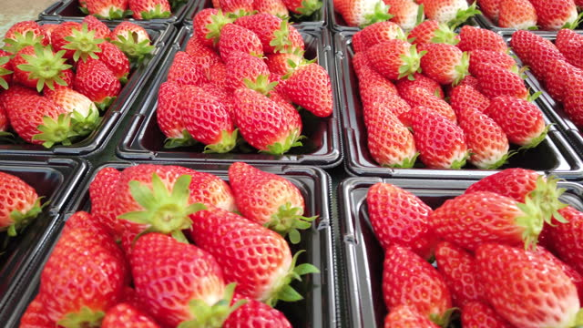 vídeos de stock e filmes b-roll de lots of fresh strawberries on trays ready for sale - juicy