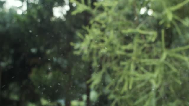 stockvideo's en b-roll-footage met veel mug die in bos vliegt - mug