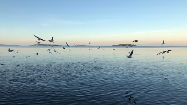 viele möwen fliegen in blauer himmel - tierkörper stock-videos und b-roll-filmmaterial