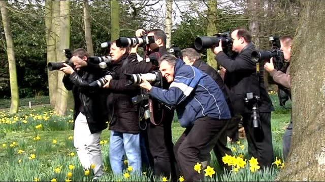 lottery winners arthur and jackie wright england kent arthur wright and jackie wright sitting for photo opportunity amongst daffodils and arthur... - temperate flower stock videos and b-roll footage