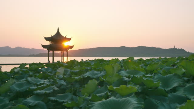 lotus field near pavilion in west lake at sunset - lily stock videos & royalty-free footage