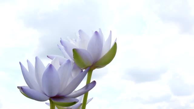 Lotus flower against beautiful blue sky