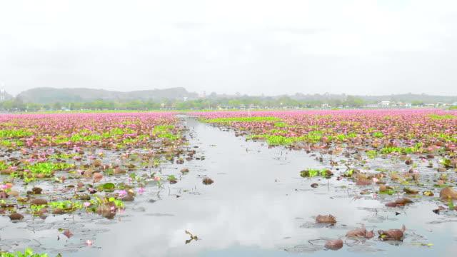 stockvideo's en b-roll-footage met lotus bloem groep - in kleermakerszit