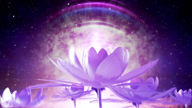 lotus - buddha stock videos & royalty-free footage