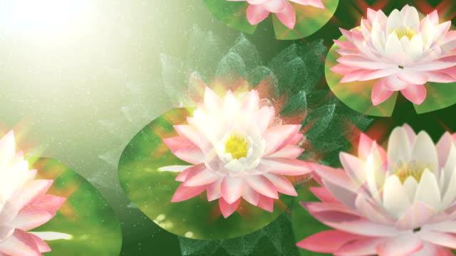 lotus - buddha stock-videos und b-roll-filmmaterial