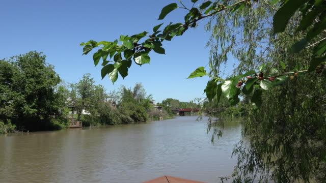 louisiana bayou bayou lafourche with tree branch - bayou lafourche stock-videos und b-roll-filmmaterial