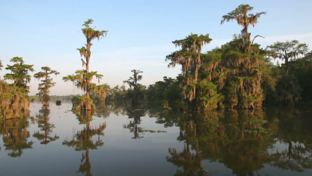 louisiana bayou - louisiana stock videos & royalty-free footage