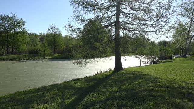 louisiana cypress tree by pond - louisiana stock videos & royalty-free footage