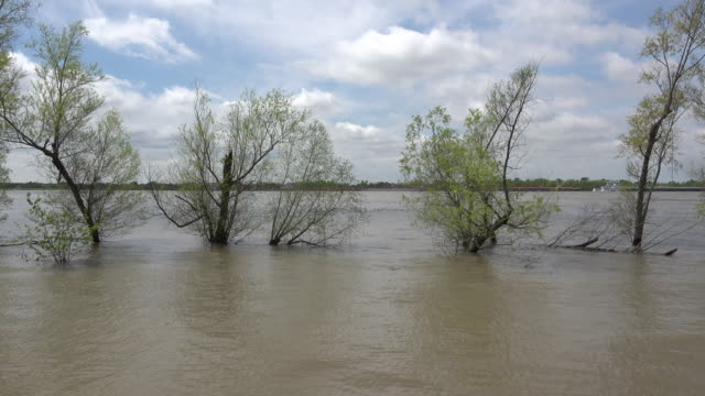 louisiana mississippi river trees in flood - mississippi flod bildbanksvideor och videomaterial från bakom kulisserna