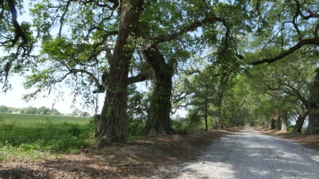 louisiana oak and pine alley sun to shade pan - mythology stock videos & royalty-free footage