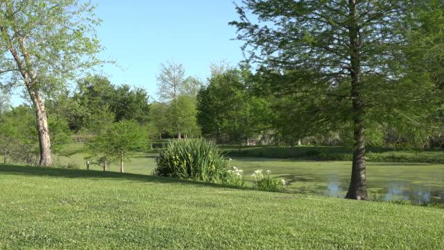 louisiana pool at woodland plantation pan right - uppdämt vatten bildbanksvideor och videomaterial från bakom kulisserna