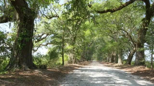louisiana sun on oak and pine alley - southern usa stock videos & royalty-free footage
