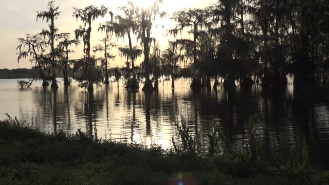 vídeos de stock e filmes b-roll de louisiana sunlight sparkles on swamp with backlit cypress - back lit
