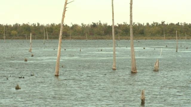 vídeos de stock e filmes b-roll de louisiana wetlands on april 19 2011 in new orleans louisiana - lamaçal