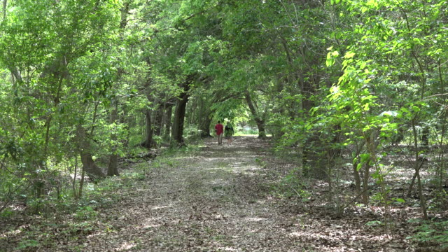 louisiana woman and boy on woodland path zoom in - one teenage boy only stock videos & royalty-free footage