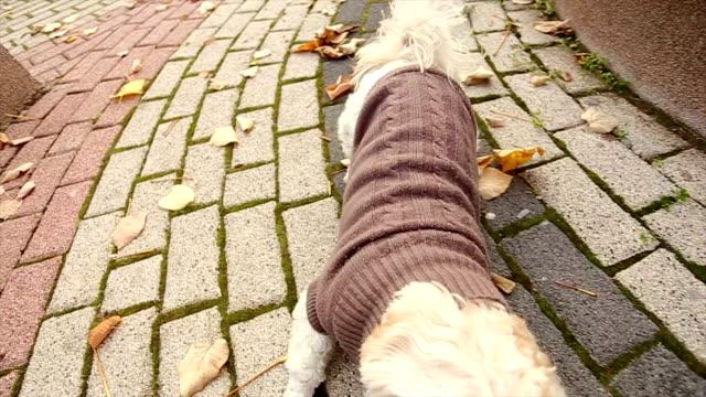 vídeos de stock, filmes e b-roll de amor cão biscoitos! - casaco curto com mangas
