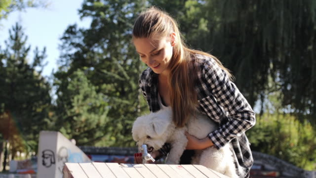 love is care. maltese dog gets refreshment from drinking fountain. lap dog drinking water from female owner's hand on sunny day - lap dog stock videos & royalty-free footage