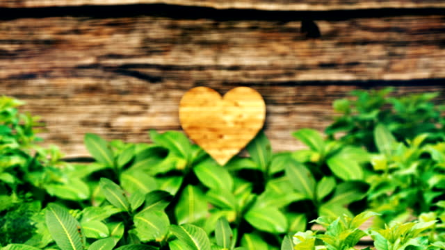 Love Nature, Heart Shape, Valentines Day