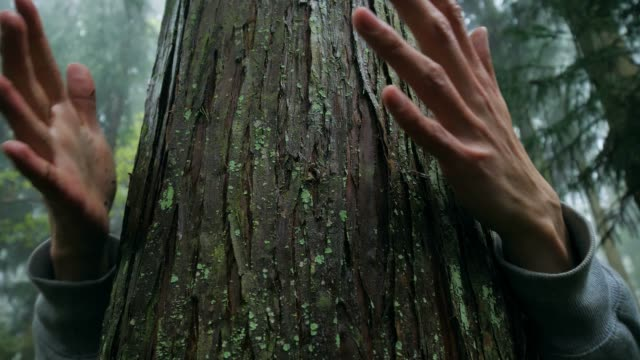 love nature,hugging wood trunk in forest - tree trunk stock videos & royalty-free footage