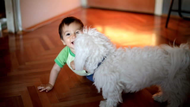 i love you child - pet owner stock videos & royalty-free footage