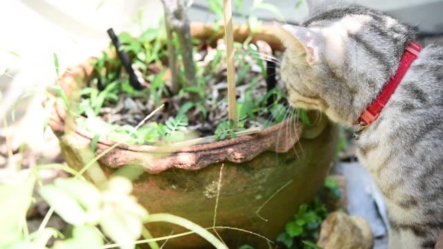 eine schöne katze, die gras im garten isst, medizinpflanze für katzen - bamboo plant stock-videos und b-roll-filmmaterial