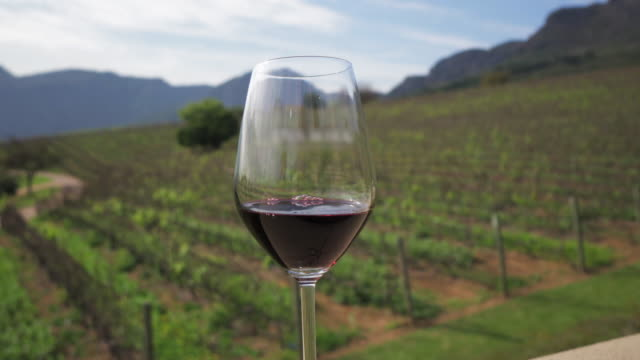 a lovely close up pan of a glass of red wine with long background of trellised grape vines and distant hills - cape town, south africa - wine glass stock videos & royalty-free footage