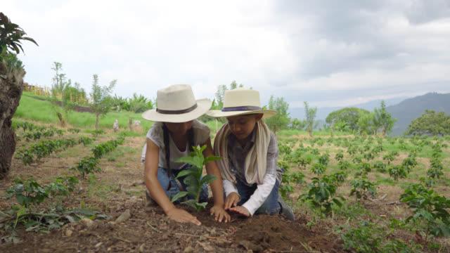 vídeos de stock, filmes e b-roll de lindo casal de filhos, plantar uma planta de café com as mãos - latino americano