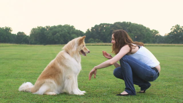 vídeos y material grabado en eventos de stock de grulla de alta definición: adorable niña jugando con perro - sólo una adolescente