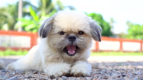 lovely dog - staring stock videos & royalty-free footage
