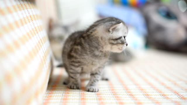 lovely kitten on sofa