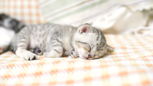 lovely kitten sleeping of sofa