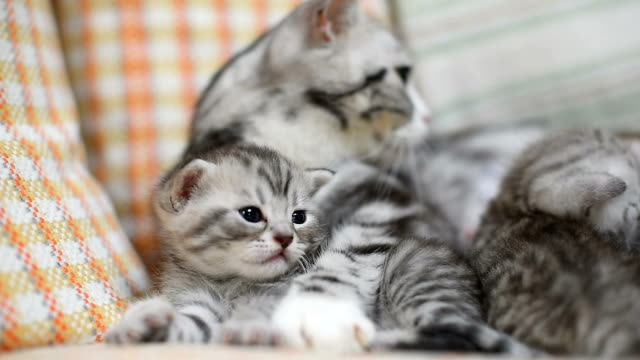 lovely kitten with mother on sofa