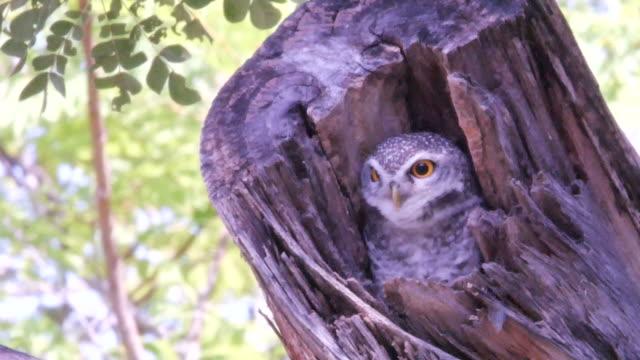lovely little owl hidden on tree