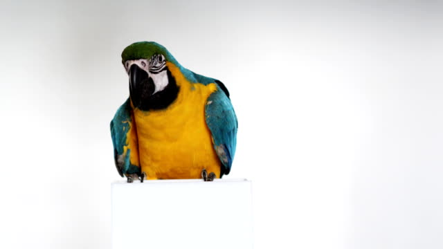 lovely parrot (1080p) - parrot stock videos & royalty-free footage