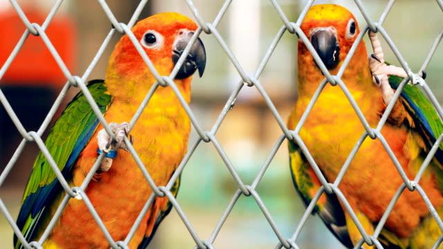 schöne papageien im käfig - tier in gefangenschaft stock-videos und b-roll-filmmaterial