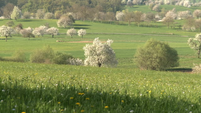 lovely shots of springs in switzerland